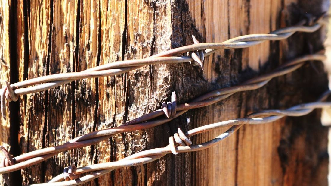 No People Barbed Wire Strong Nevada Close-up Dangerous Protection Western Outdoors Metal Safety