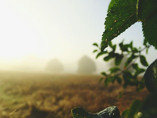 Water Droplets Dropplets On Leaves Beautiful Morning Misty Morning Blurry Background Morning Dew Fieldscape Faded Background Through The Mist Dim Light Cloudy Sunrise EyeEm Gallery Eyeem Market Eyeem Photography EyeEm Getty Collection