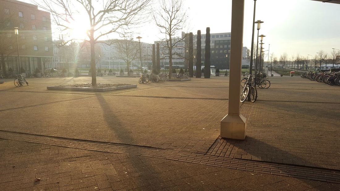 City Outdoors Tree Building Exterior No People Day Nature Sky Maastricht Holland Maastrichtcity Netherlands Nature 2016