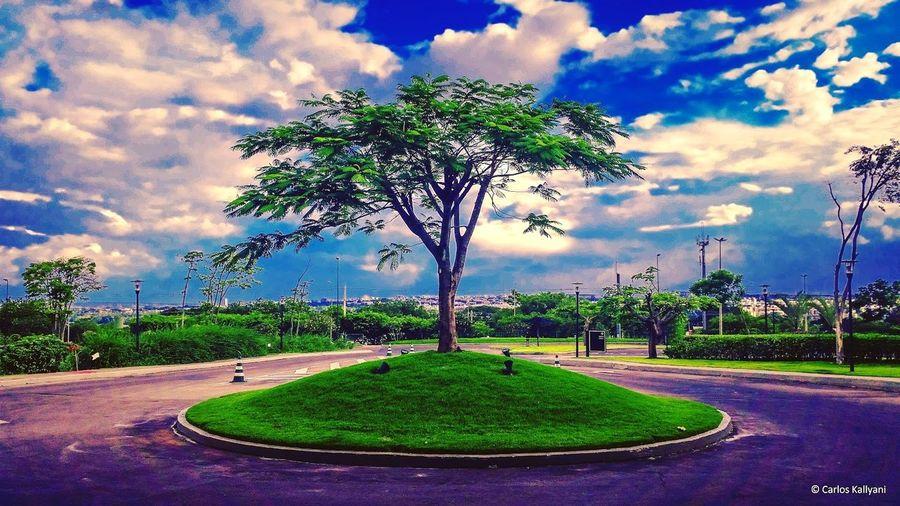 Brasília ao fundo Tree Cloud - Sky No People Scenics Fotoartegram Fotografia Eye For Photography EyeEm Best Shots Photography EyeEm The Best Shots Jardim EyeEm Gallery City Arvores... 🌿❤ árvores Brasília Jard