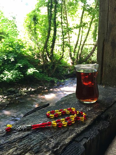 Karacaaslankamping Kocaeli Traveling Türkiye Agac Tea