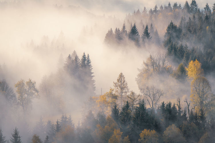 Panoramic view of trees during foggy weather