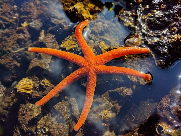 Starfish  Sea Life Star Shape One Animal Underwater Animal Themes Animals In The Wild Animal Wildlife Orange Color Animal Beauty In Nature Sea Water UnderSea Close-up No People Outdoors Day