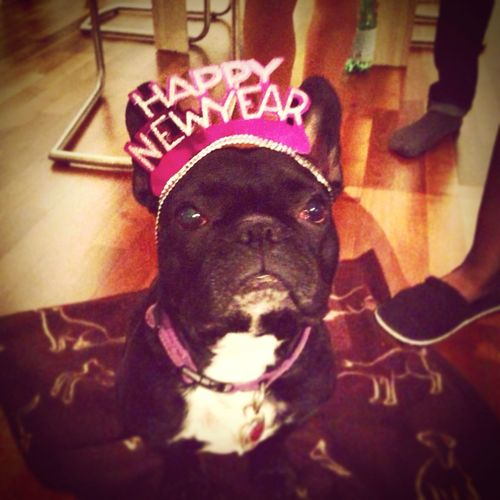 Happynewyear Aimée My Frenchie❤️