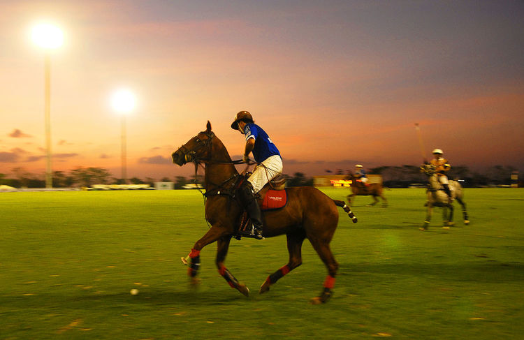 Atmosphere of the polo field in the a polo match Athletes are competing in both horse riding in Thailand. Bangkok Thailand. Light Activity Animal Animal Themes Attack Competition Competitoe Evening Horse Horseback Riding Light And Shadow Livestock Mammal Movement Outdoors Polo Field Polo Match Real People Ride Riding Sky Sport Sunset Working Animal