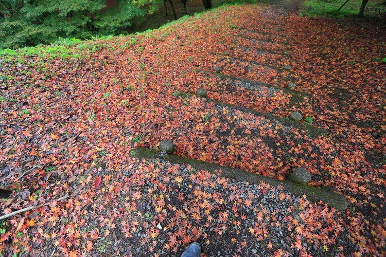 紅葉の階段♪🍁 Autumn