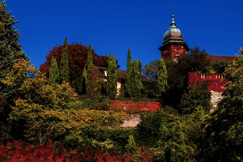 Old Town in autumn in Baden-Baden, Germany Baden-Baden Germany Old Town Old Plant Architecture Tree Built Structure Building Exterior Building Sky Nature Growth No People Place Of Worship Blue Day Change Religion Autumn Belief Spirituality Outdoors Clear Sky