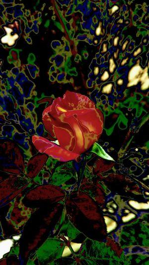Rosé Eyemart Eyem Best Edits Artgallery EyeEmBestPics EyeEm Gallery World-class Imagination