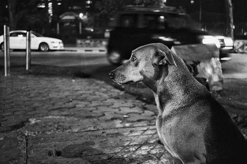 In thoughts of his own. Dog Pose Monochrome Blacknwhite Shadows Loveineyes Street Photography Straydog Matunga Nights  Mumbai DogsofMumbai