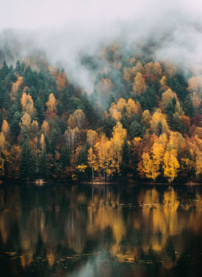 Stunning colorful autumn scenic view highway in Maramures, Romania. Autumn Autumn colors Beautiful Landscape_Collection Maramures Autumn Beauty In Nature Day Firiza Fog Foggy Forest Lake Lake View Mist Nature No People Outdoors Reflection Scenics Sky Tranquil Scene Tranquility Tree Water