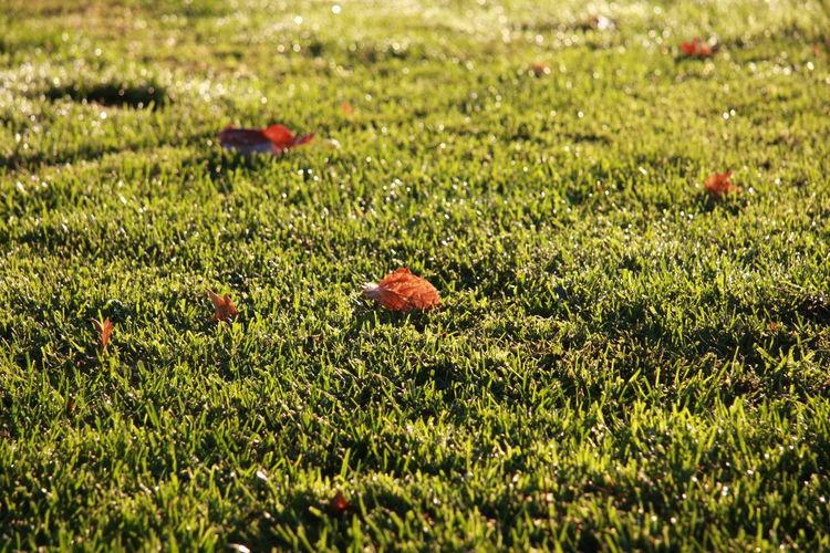 Green Grass Morning Fallen Leaves Fall Winter Dew Sunrise Park