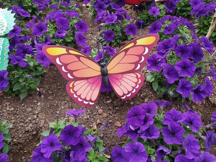High angle view of butterfly on pink flowering plant