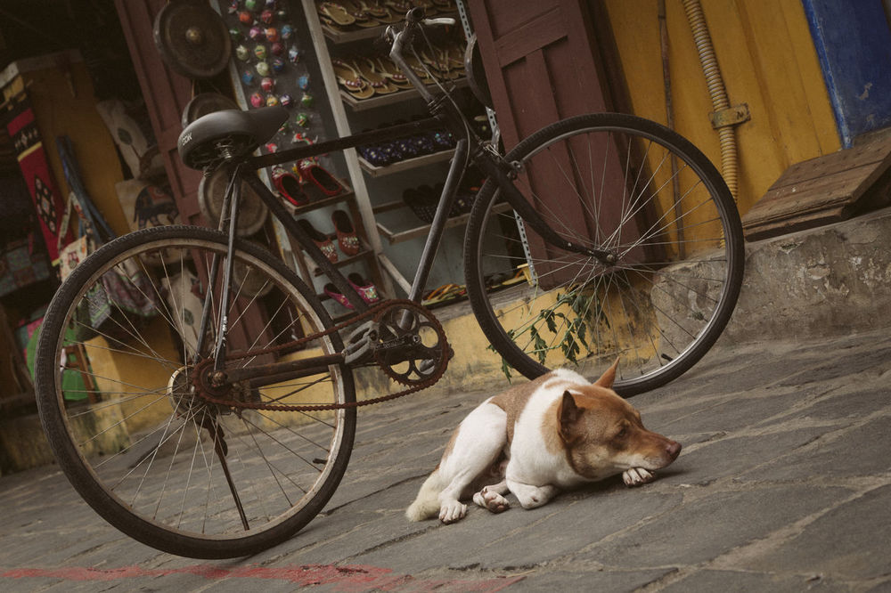 Dog in Hoi An, Vietnam Animal Themes ASIA Bicycle Color Colorful Day Dog Doggy Domestic Animals Hoi An Land Vehicle Mammal Mode Of Transport No People One Animal Outdoors Pets Street Streetart Streetphotography Transportation Urban Urbanlandscape Vietnam Vietnamese