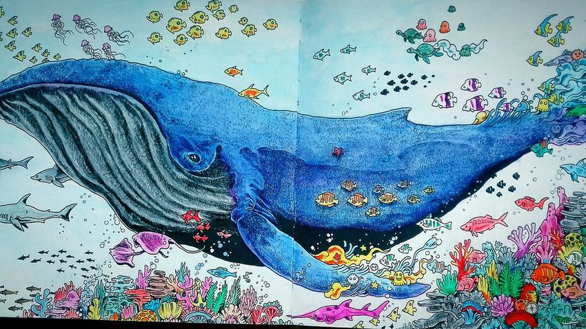Animal Themes Coloringbook Ocean Mammal Art Colourful Under Water
