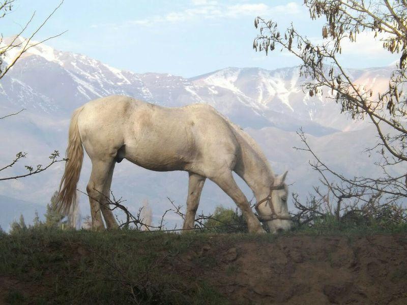 Thegreatoutdoors-2016eyeemawards Horse Photography