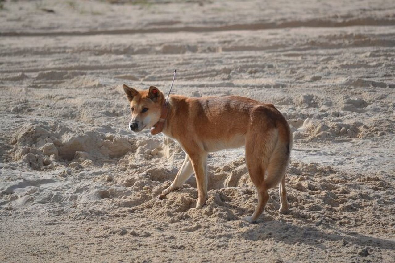 one animal, animal themes, mammal, animals in the wild, sand, animal wildlife, no people, outdoors, day, nature, beach