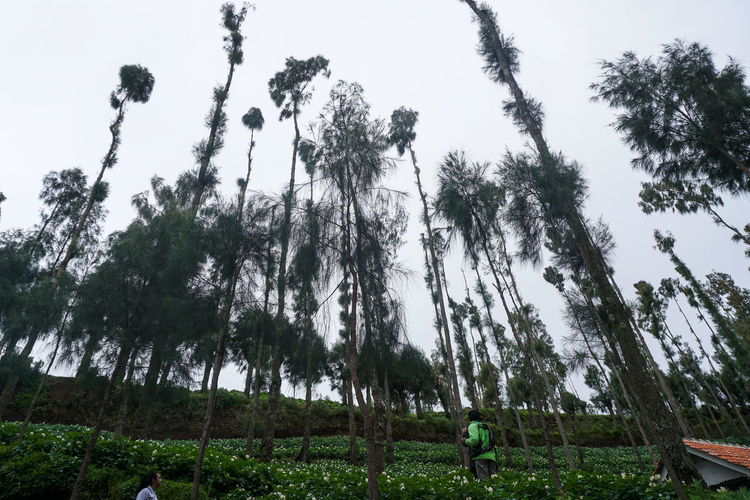 Gardens and Nature, Mount Bromo. Tree Plant Sky Growth Land Low Angle View Nature Tranquility Day Beauty In Nature No People Grass Tranquil Scene Outdoors Field Trunk Tree Trunk Scenics - Nature Forest Green Color Bromo Beauty In Nature Bromo-tengger-semeru National Park Bromo Mountain