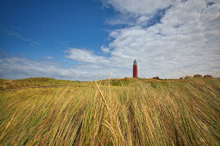Grassy landscape with lighthouse in background