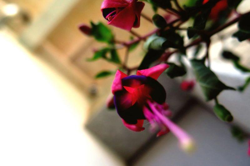 Flower From The Floor Garden