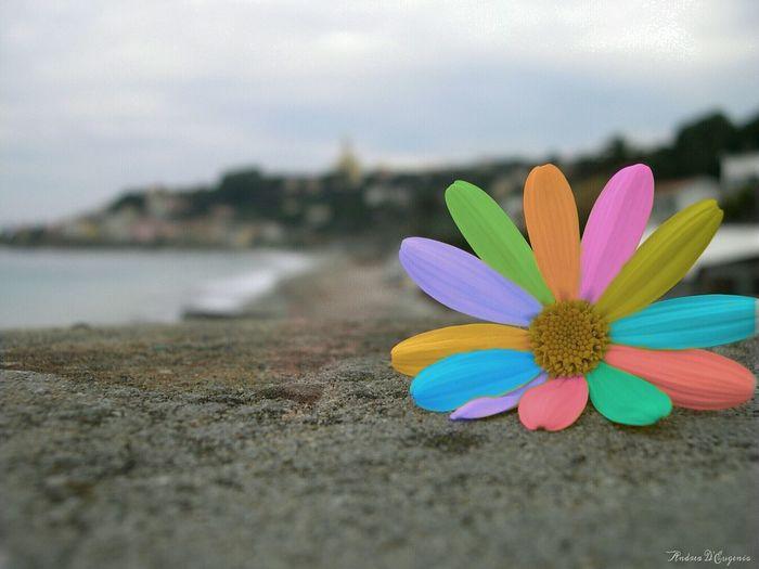 Flower Color Full Colors  Heppy Riviera Liguria Nature