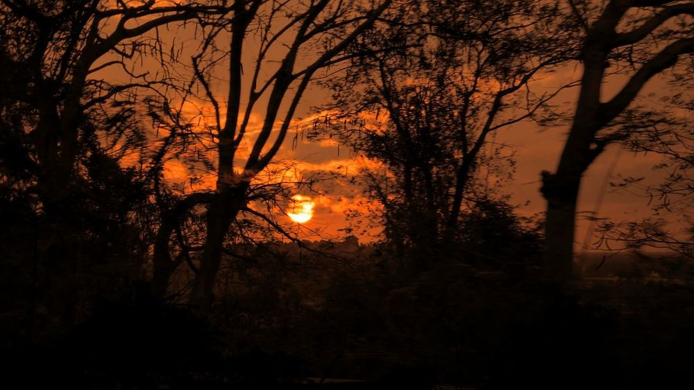 ..neveR... LeT.. tHe.. samE... fLamE... buRn... yOu.. twicE... Sunset Cloud - Sky Burning My World Lost Kerala Tree Orange Color Nature Silhouette Scenics Beauty In Nature Outdoors Tranquility Forest Landscape Sunlight Sky Tranquil Scene