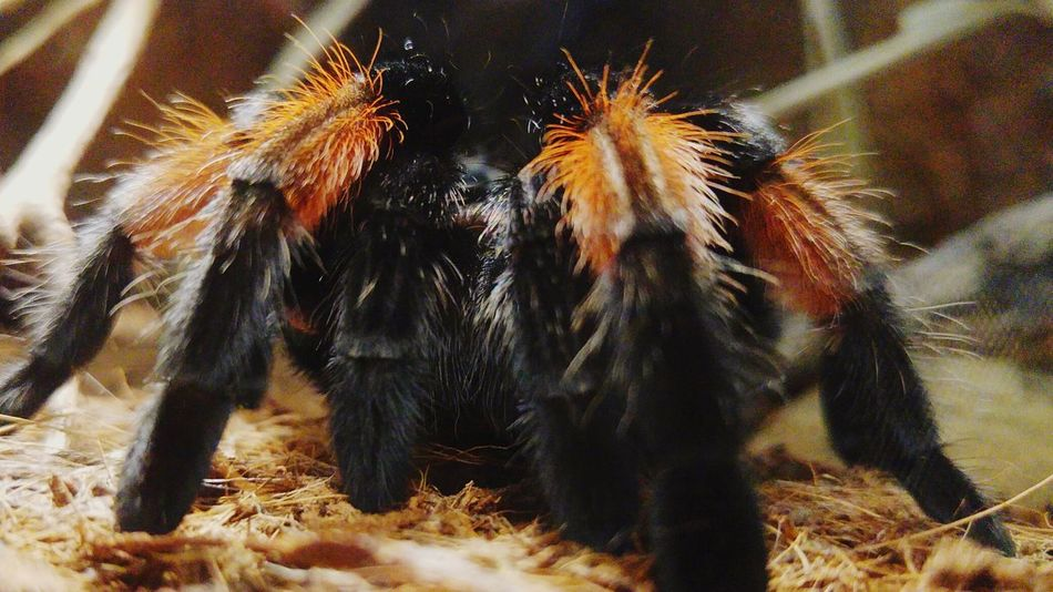 Spider Ragno Zoology Zoosafaripark Pombia Insect Animal Themes Spider