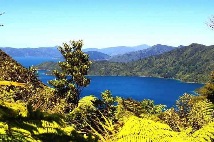 That nature Marlborough Sounds Queencharlotte Sound Newzealand New Zealand Scenery Nature Traveling Travel Traveltheworld Southisland Hiking