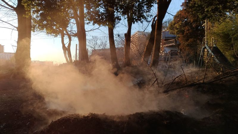 Bushfire Fire Smoke Smoldering No People Tree Day Outdoors