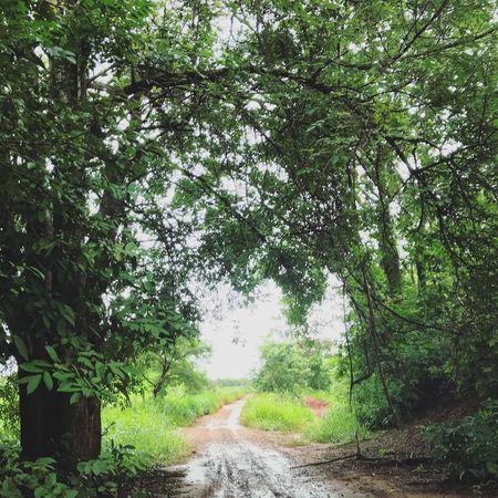 Cheirinho de terra molhada, lugar de paz ✌🏽♥️