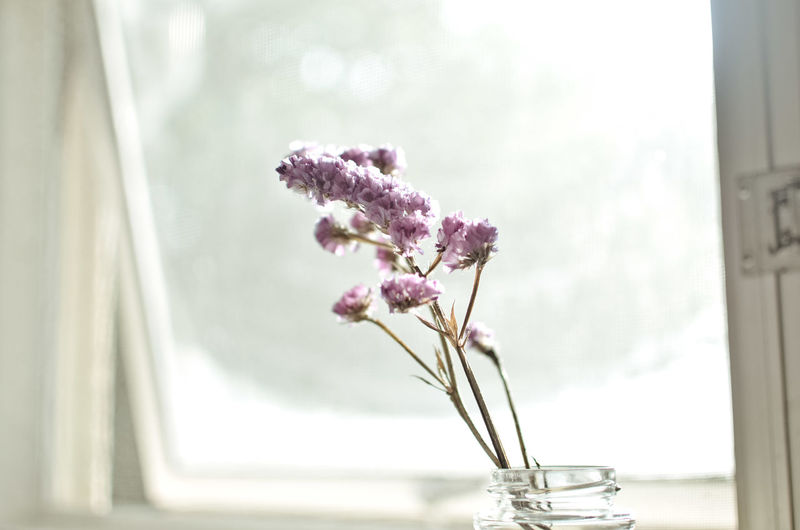 Close-up of vase against window