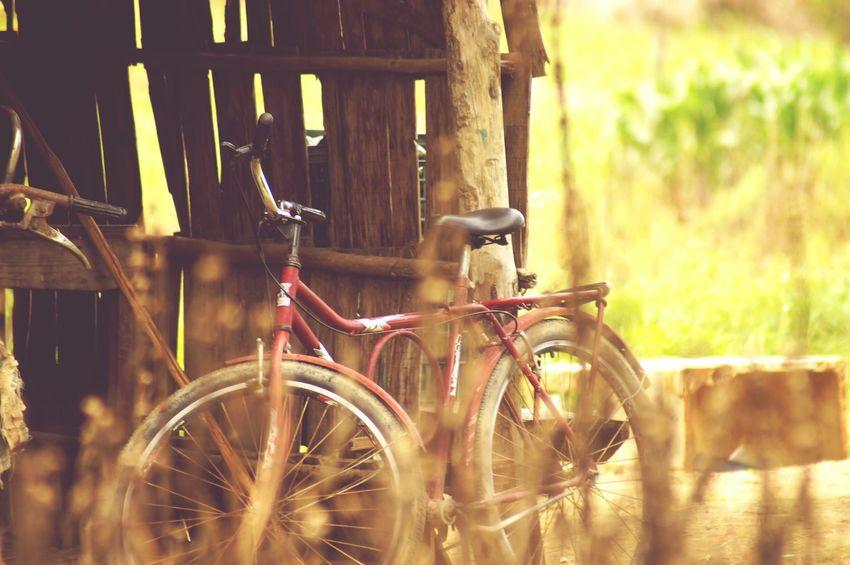Old bike Bicycle Transportation Stationary A580 Fresh On Eyeem