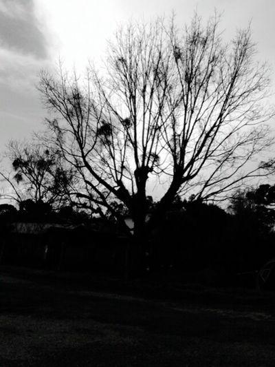 Horrortree Blackandwhite Night Horror