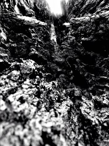 Darkness And Light EyeEm Best Shots - Black + White Nature Collection Textures And Surfaces Blackandwhite Photography Light And Shadow Eye4photography  Hidden Worlds Abstractions Small World
