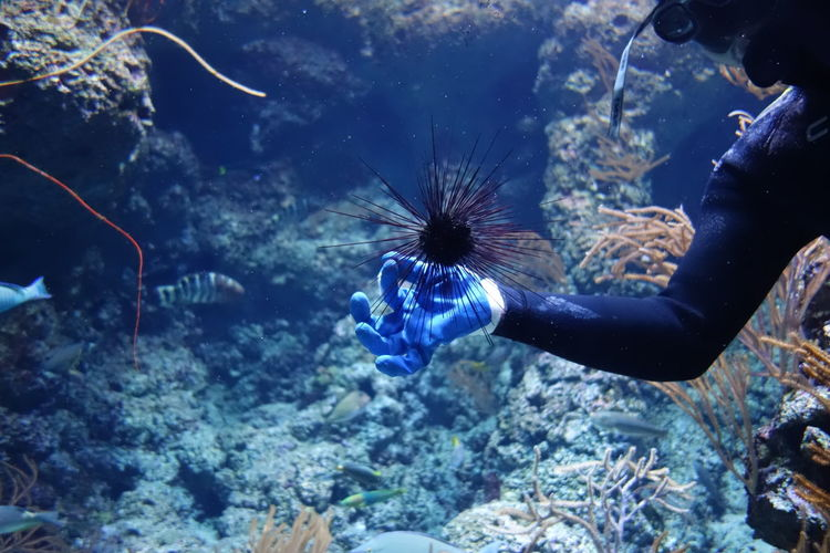 Cropped image of scuba diver swimming by urchins in sea