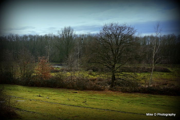 Bare Tree Beauty In Nature Day Grass Growth Landscape Nature No People Outdoors Scenics Sky Tranquil Scene Tranquility Tree