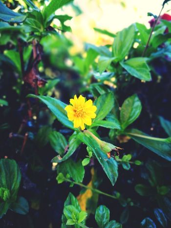 Close-up Only One Only Leaf Flower Green Color Plant Multi Colored Nature Living Organism Yellow Outdoors Beauty In Nature Plant Part Flower Head