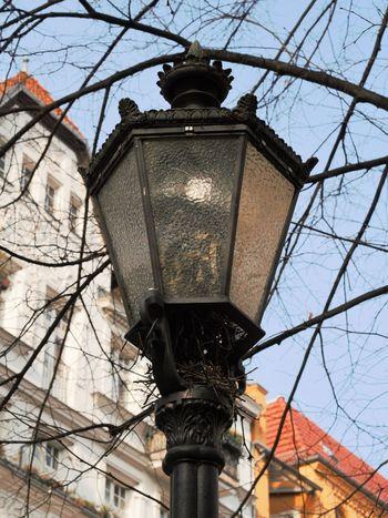 Smart bird! ;) Berlin Birds Citybirds Lampost Nest Observations Olympus Prenzlauerberg