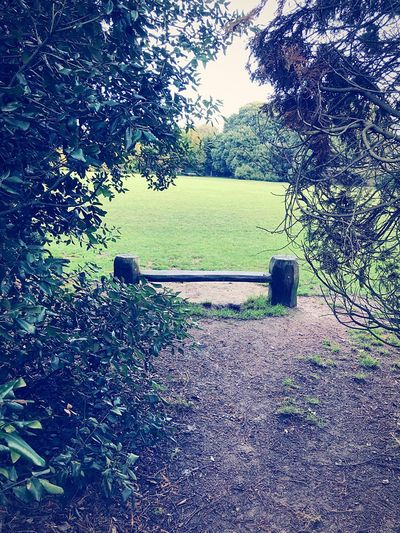 Tree Bench No People Growth Beauty In Nature Outdoors Grass Nature Day
