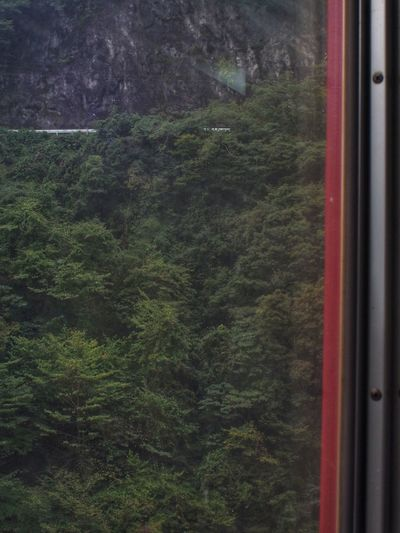 View From Train Window Train Window View From The Window... Road Trees Lines Train - Vehicle Simplicity Simple Photography Minimalism Nature And Manmade 車窓から 大井川鐵道 Rail Transportation