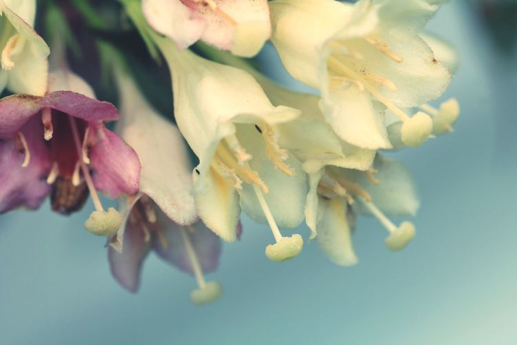 Weigela 野草 Wildflower Macro Photography Flower Water Close-up Flower Head