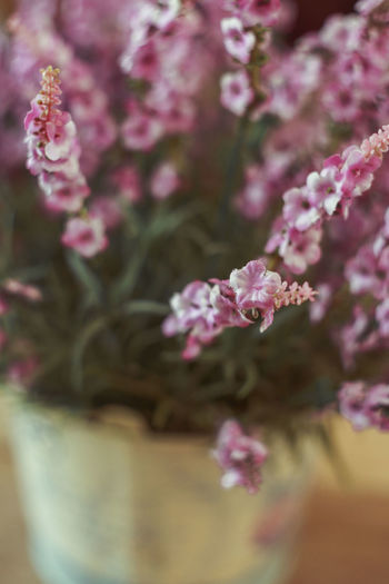 Pink flowers in a vase. Plant Flowering Plant Flower Pink Color Beauty In Nature Freshness Fragility Vulnerability  Nature Growth Selective Focus Close-up No People Outdoors Day Blossom Springtime Tree Vase Pink Flower