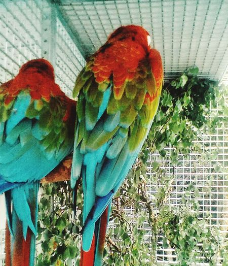 Parrot Bird Animal Themes Day Perching Macaw No People Nature Outdoors Close-up Animals In The Wild Gold And Blue Macaw Blue Rainbow Lorikeet Multi Colored