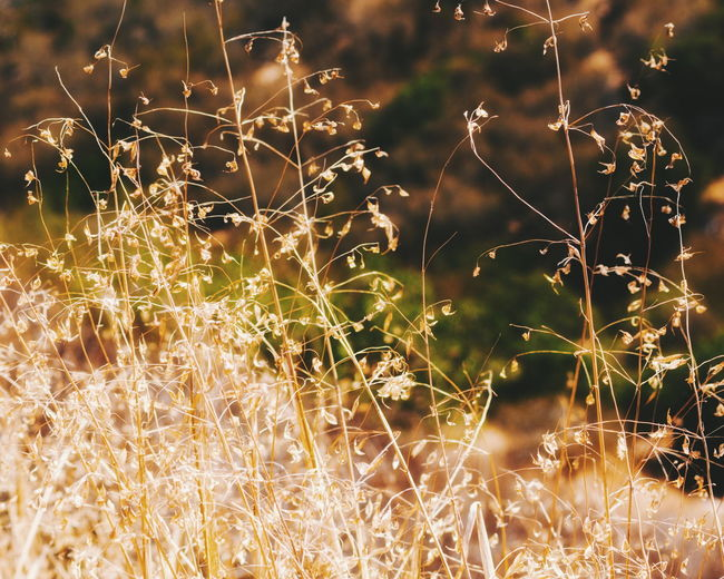 No People Outdoors Nature Illuminated Backgrounds Plant Close-up Beauty In Nature Defocused Freshness Sunlight