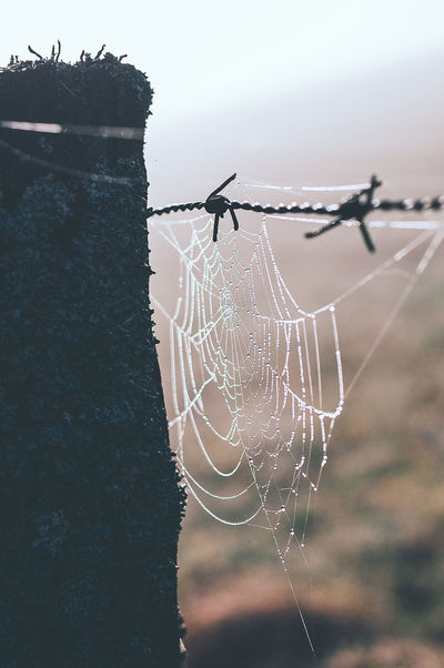 Misty Morning in the German Sauerland. EyeEm Best Shots EyeEm Nature Lover EyeEm Selects EyeEmNewHere Animal Animal Themes Barbed Wire Barrier Boundary Close-up Complexity Day Fence Focus On Foreground Fragility Nature No People Outdoors Protection Safety Security Sky Spider Spider Web Wire