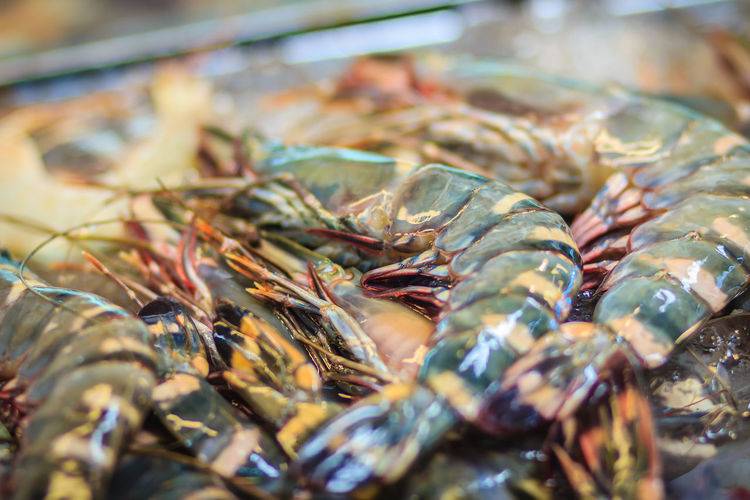 Extra large size of Penaeus monodon, commonly known as the giant tiger prawn or Asian tiger shrimp is a marine crustacean that is widely reared for food. Tiger prawns for sale at the seafood market. Asian Tiger Shrimp Penaeus Penaeus Monodon Tiger Prawn Tiger Shrimps Animal Close-up Crustacean Day Fish Fishing Industry Food Food And Drink For Sale Freshness Giant Tiger Giant Tiger Prawn Healthy Eating Indoors  Market No People Raw Food Ready-to-eat Retail  Seafood Selective Focus Still Life Tiger Prawns Tiger Shrimp Wellbeing