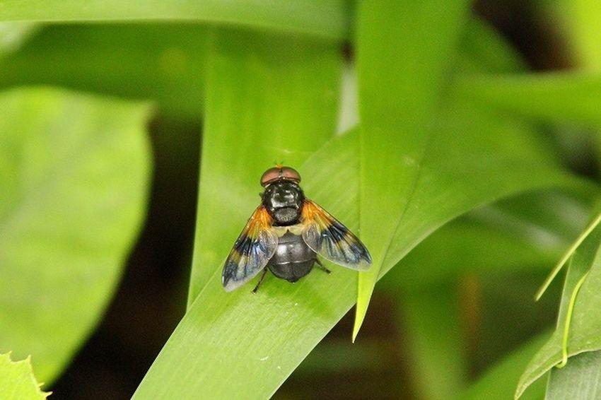Bug Bugs Close-up Japan Nature Nature_collection Outdoors