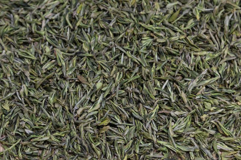 Close up of Yiliang Baohong tea leaves in Yunnan, China Yiliang Kunming, China Tea Tea Leaves Tea Harvesting Yi Minority Ethnic Group China ASIA Tea Garden Tea Production Tea Processing Puer Tea Oolong Tea