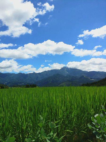 Rice fields and mountain sides Mountain Agriculture Rural Scene Nature Mountain Range Beauty In Nature Field Freshness Flower Tree Sky Landscape Springtime Scenics Vibrant Colour Tranquil Scene Travel Destinations Sunny Afternoon Vacations Sun Vibrant Luminous Colours Japan Sky Japan Photography