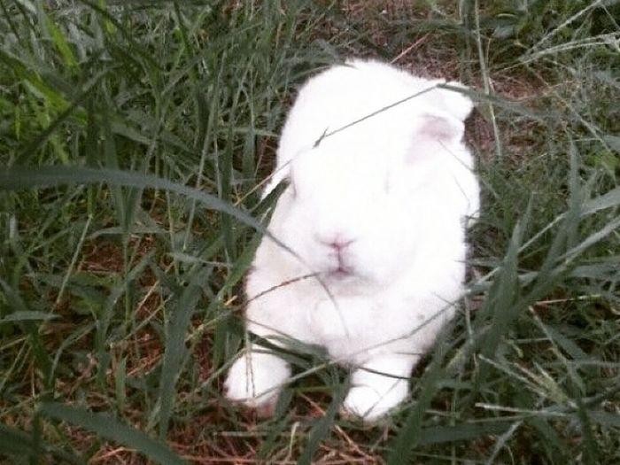 ใบทอง คับผม Rabbits Rabbitsofinstagram Bunny  Bunnys Bunnylove Capture The Moment Hello World EyeEm Best Shots