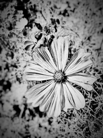 Nature Close-up No People Day Growth Outdoors Fragility Flower Beauty In Nature Blooming Wildflower Michigan, USA Michigan Creative Light And Shadow Creative Editing Black & White